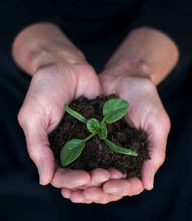 Source Nutrition - Hands with seedling